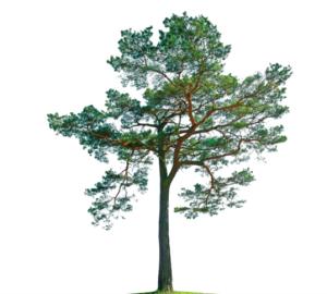 tree-kaywilson